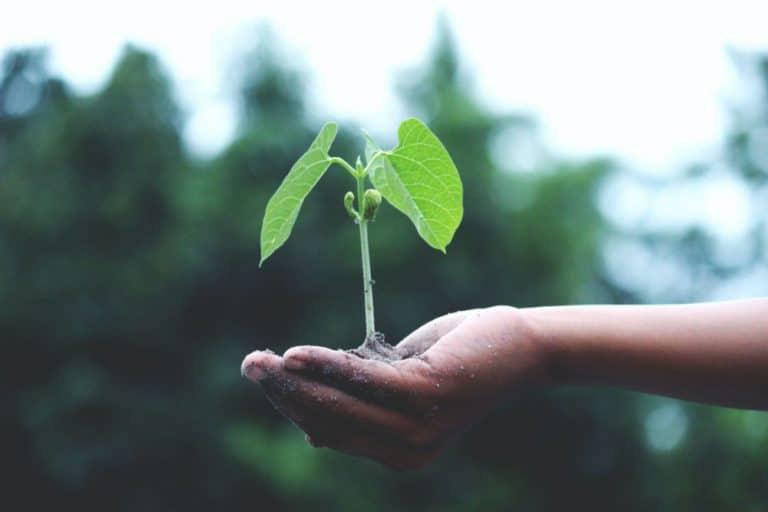 panela y sostenibilidad